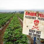 Choosing Produce: Beware the Dirty Dozen!