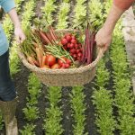 Last Chance for Summer's Garden Food