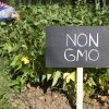 Non-GMO Commitment