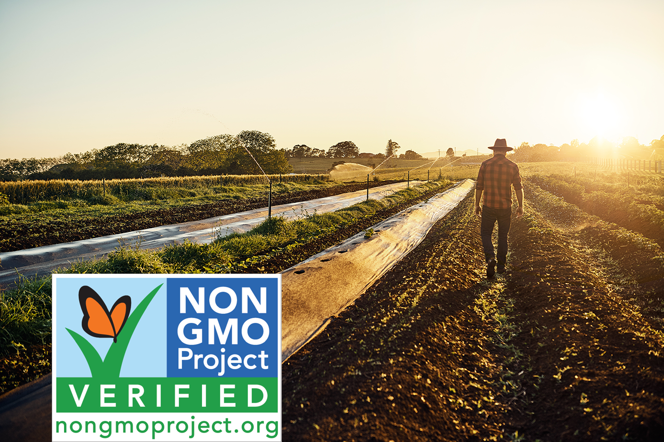 We're on a Mission to Say No to GMO's