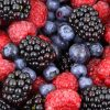 Spotlight on BioFruit: The Antioxidant Powerhouse