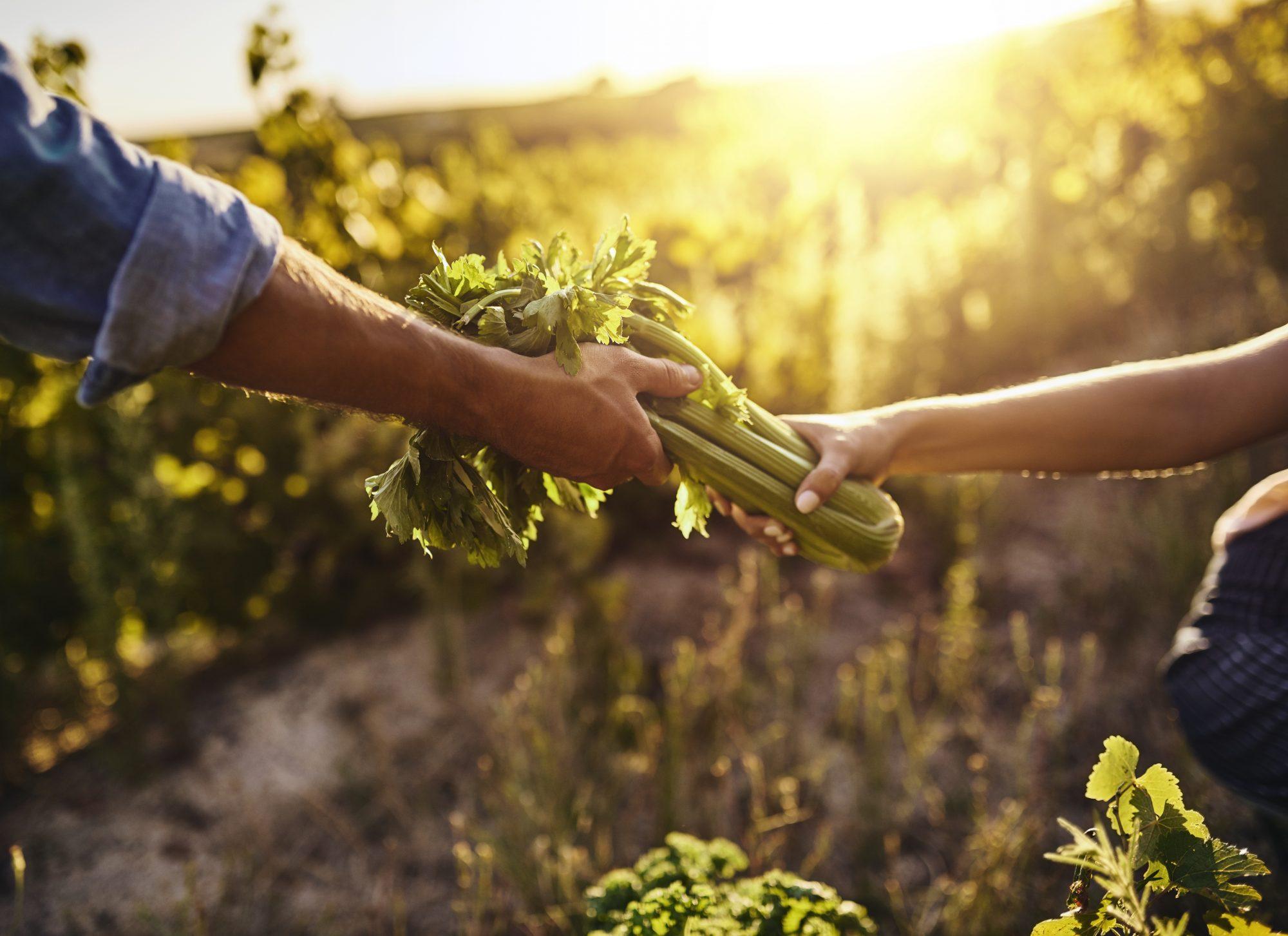 National Celery Month: Snacks & Recipes